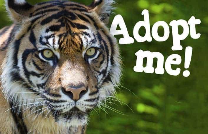 How zoos help animals