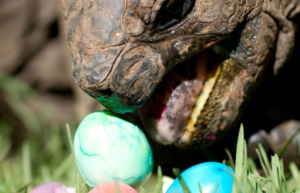 Have an egg cellent easter and school holidays adelaide zoo 27 mar negle Image collections