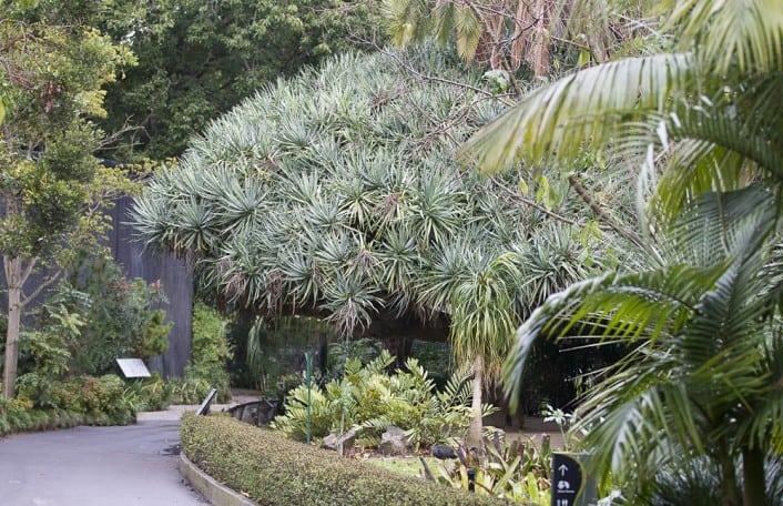 Adelaide zoo gardens adelaide zoo for Garden trees adelaide