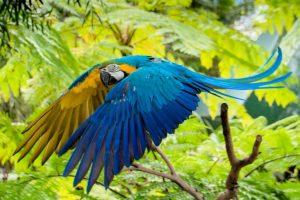 Macaw - J Rhind