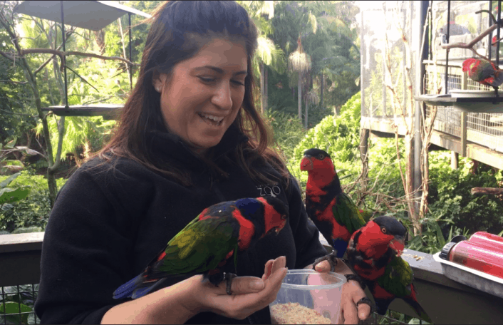 Bird Keeper Emma with Black-capped Lories.
