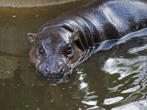 Adelaide Zoo water sustainability