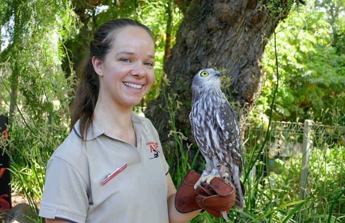 Adelaide Zoo barking owl
