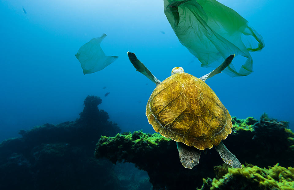 Plastic Adelaide Zoo