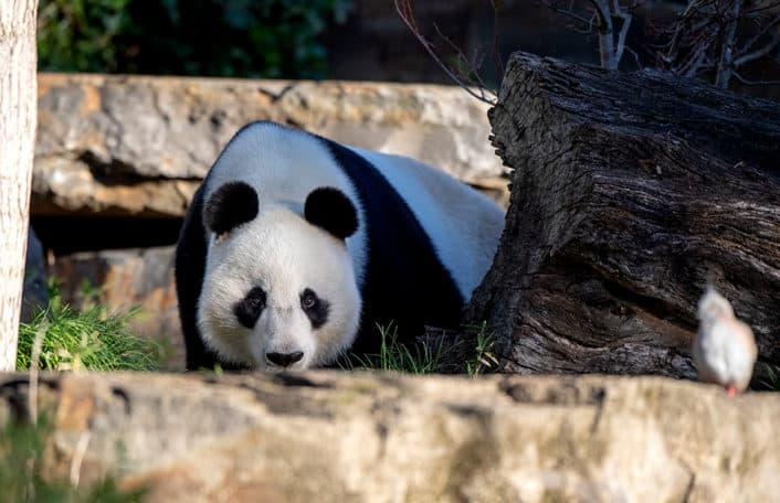 News - Adelaide Zoo