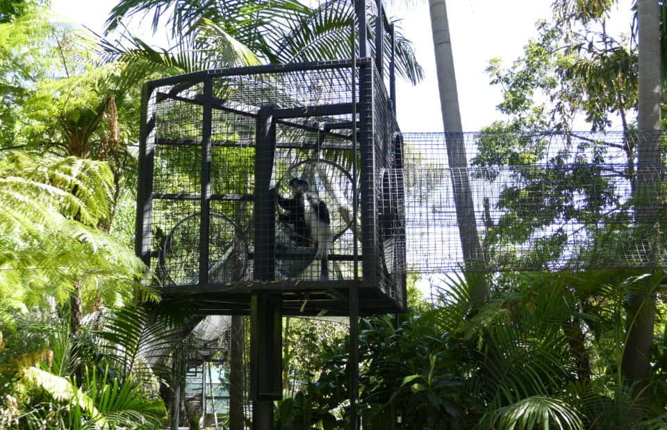 Colobus Crossing, Adelaide Zoo