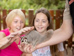 San Diego Zoo Kids TV Adelaide Zoo squirrel glider