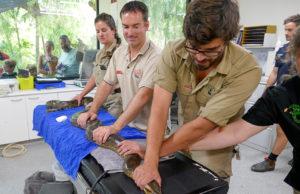 Anaconda Mrs Dashwood health check keepers