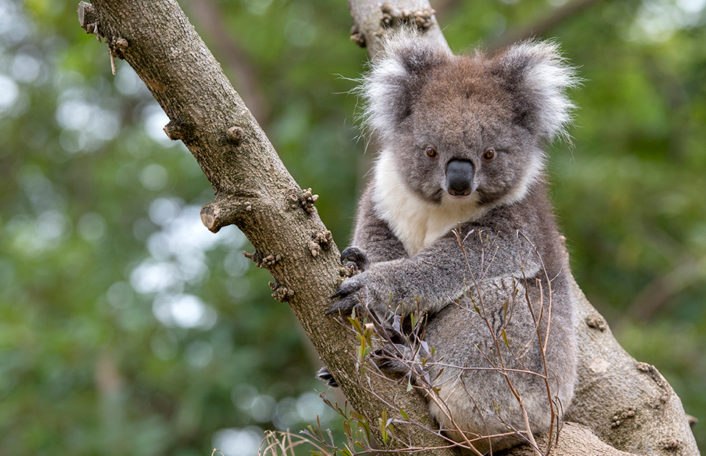 Adelaide Zoo bushfire Wildlife Conservation Fund