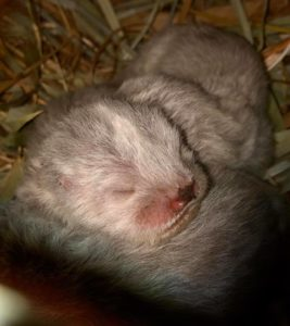 Adelaide Zoo otter pups