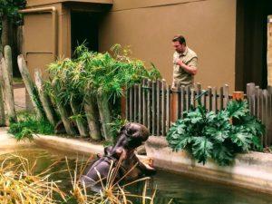 Brutus Matt Adelaide Zoo
