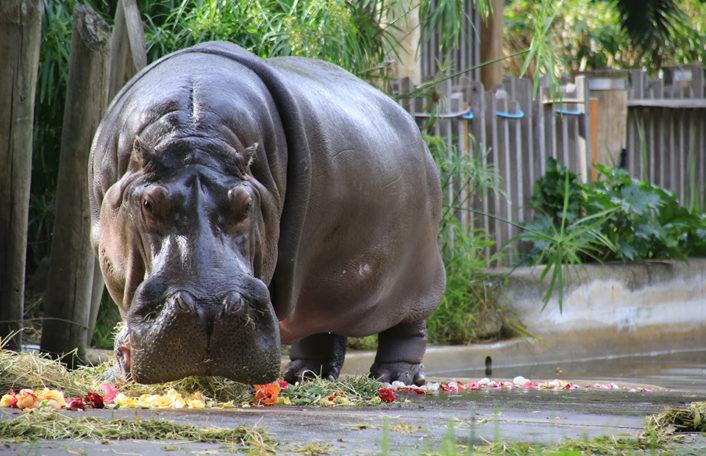 Vale Brutus Adelaide Zoo