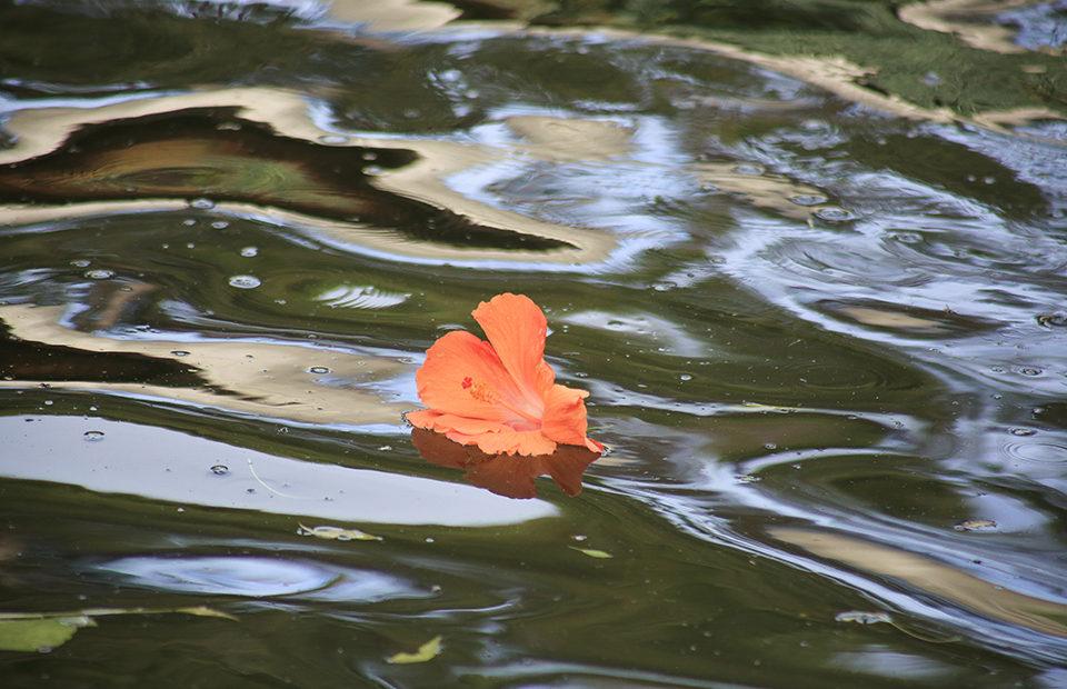 Brutus flower Adelaide Zoo