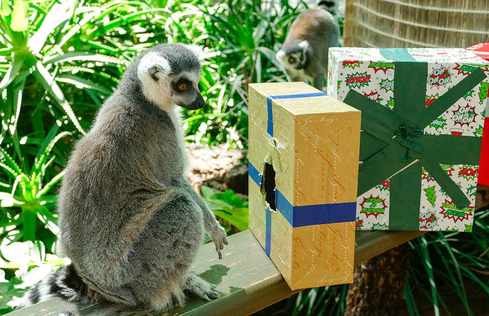 Christmas gift guide Adelaide Zoo