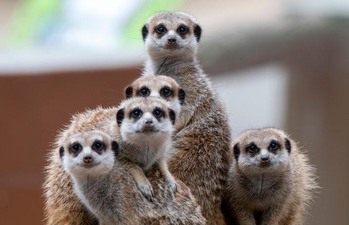 New Year Adelaide Zoo