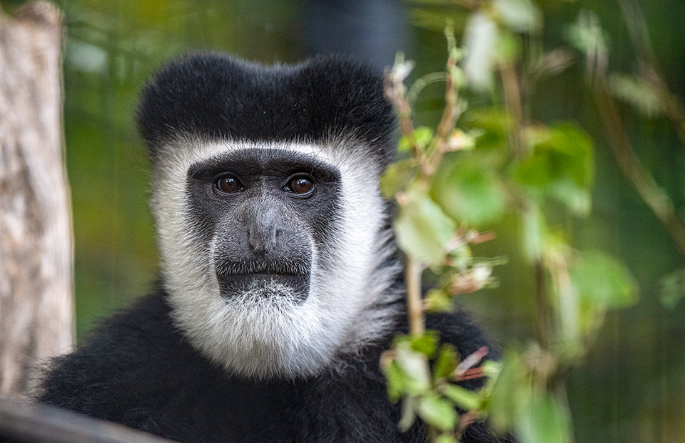Activity budgets science animal welfare Adelaide Zoo
