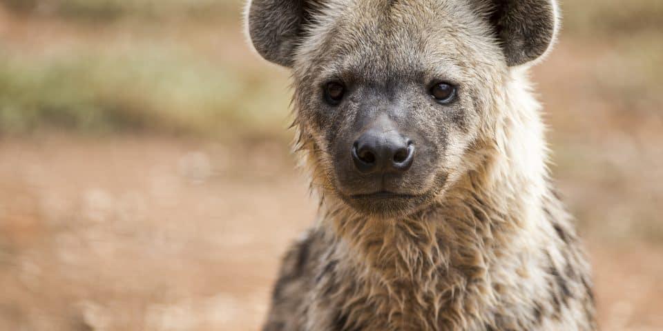 Mkoko Adelaide Zoo