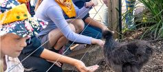 Zoocation Care children feeding chicken at Adelaide Zoo