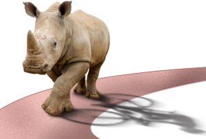 ve078-rhino-gala-web-banner1