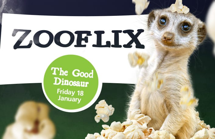 Zooflix