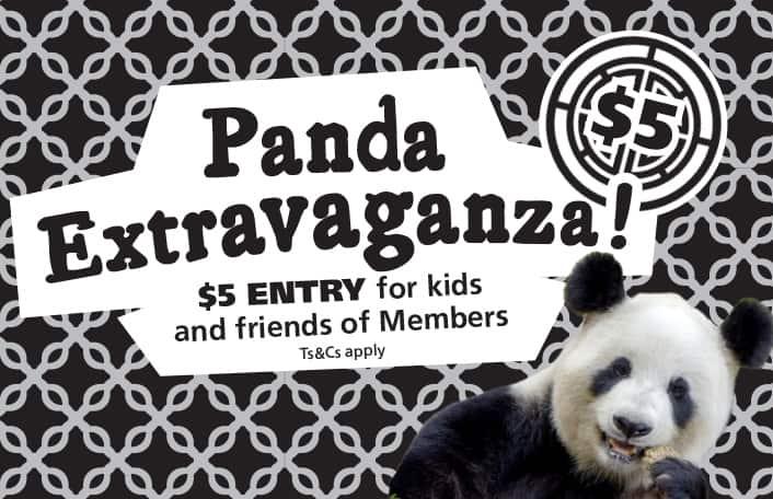 Panda extravaganza