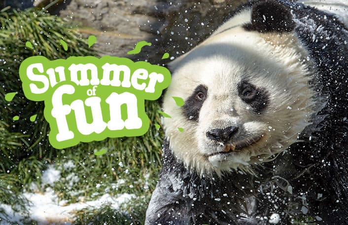 Summer School Holidays 2019-2020 panda